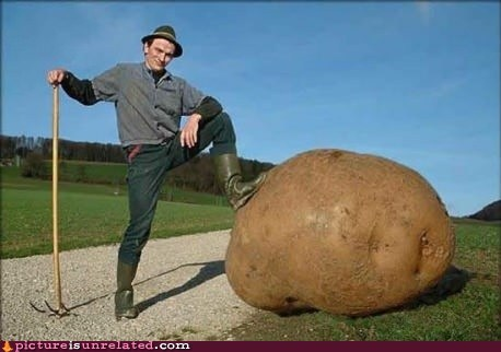farmer giant potato vegetable wtf - 6456313600