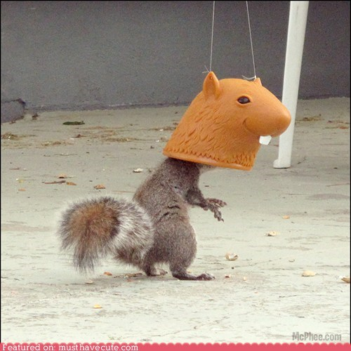 best of the week,costume,feeder,head,silly,squirrel