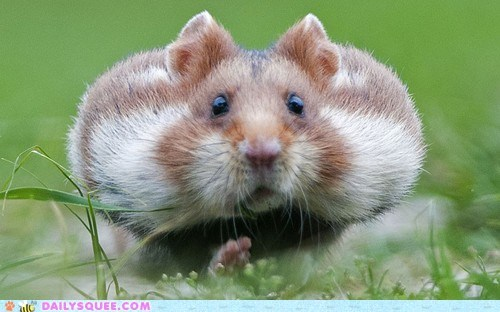 chubby cheeks mouse rodent squee whiskers Winter Is Coming - 6456350208
