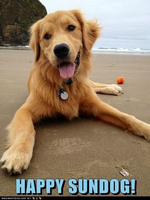 ball beach dogs golden retriever happy sundog smiling face - 6456654080