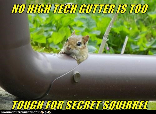 cartoons,gutter,high tech,secret squirrel,sneaking,squirrel