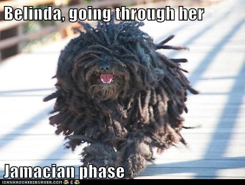 dogs dreadlocks jamaican running what breed - 6457764608