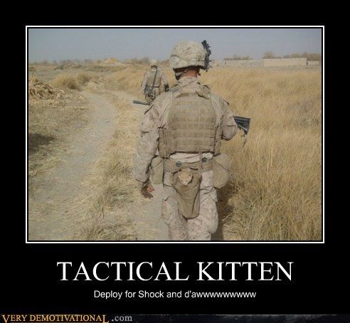 army,cute,hilarious,kitten,tactical