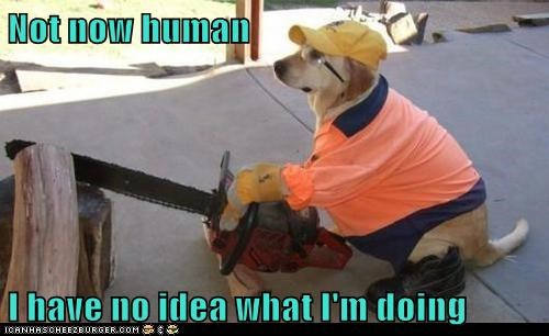 construction worker dogs golden retriever i have no idea what im do i have no idea what im doing not now - 6458596864