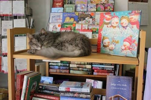 cat for sale,cat for the price of a bo,cat for the price of a bookstore