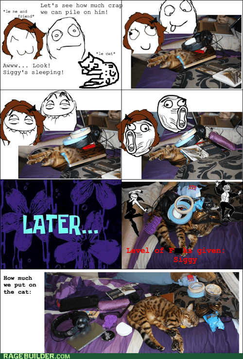 cat cute nap Rage Comics stuff - 6458850560