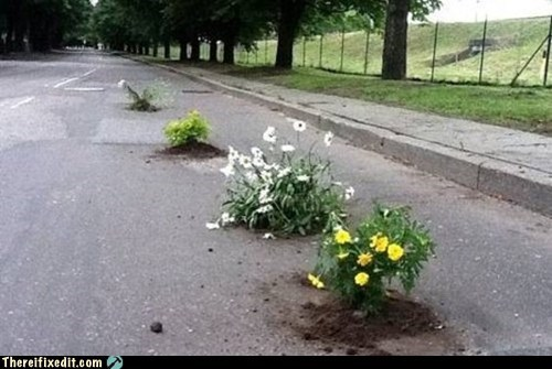 flower pot,flowers,g rated,potholes,there I fixed it