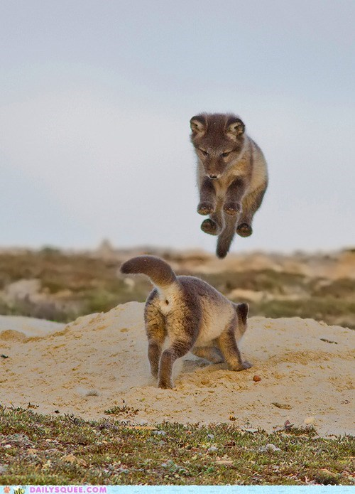 squee,fox,kits,baby,flying,circus