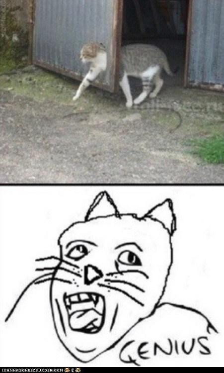 Cats FAIL genius Memes stupid why - 6459312896