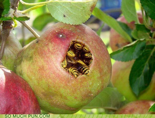 apple,applebees,bees,double meaning,literalism,name,restaurant