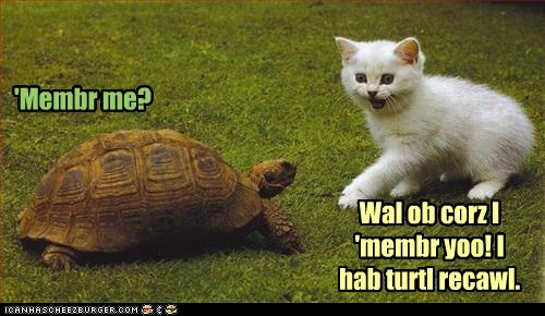 cat of course pun remember me total recall turtle - 6459396096