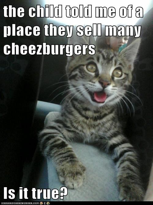 Cheezburger Image 6459397888