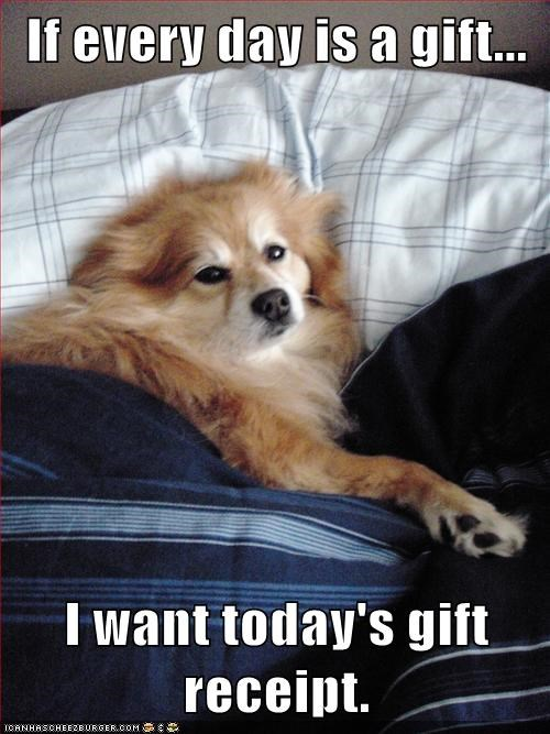 bed,dogs,gift,receipt,sick,what breed