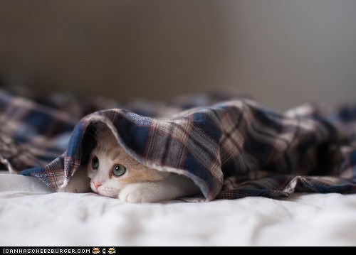 beds,blankets,Cats,cyoot kitteh of teh day,hiding,kitten,shy,underneath