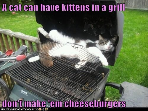 Cheezburger Image 6459934464