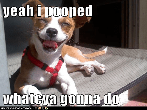 Cheezburger Image 6459965440