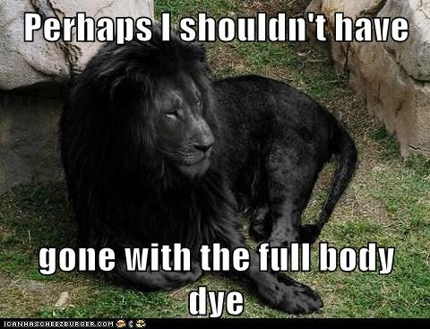 black,dye,full body,lion,regrets,second thoughts,shouldnt-have
