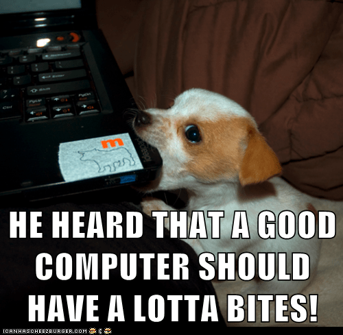 biting byte computer dogs laptop puppy what breed