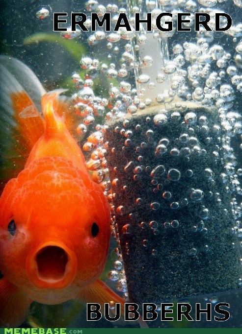 bubbles captions derp Ermahgerd fish Memes - 6460416512