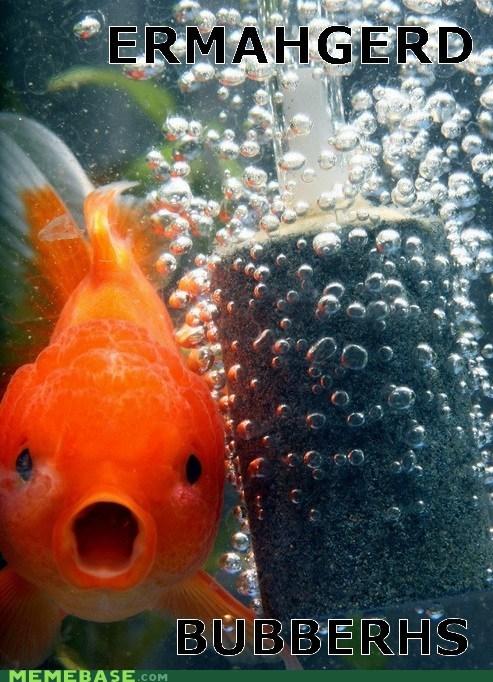 bubbles captions derp Ermahgerd fish Memes - 6460416512