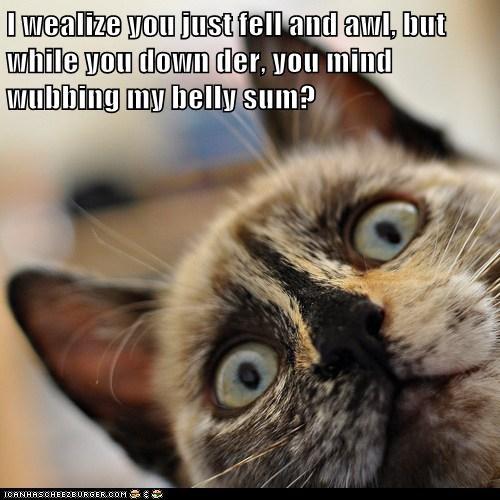 belly captions Cats fall insensitive rub tummy - 6460451840