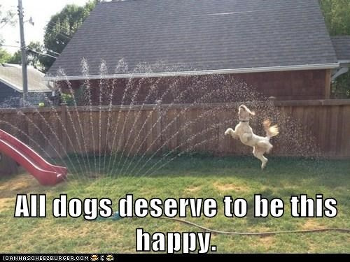 back yard captions dogs happy jumping jumping for joy sprinkler what breed - 6460914432