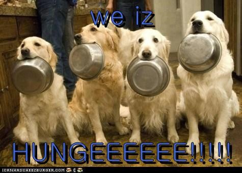 Cheezburger Image 6460954624