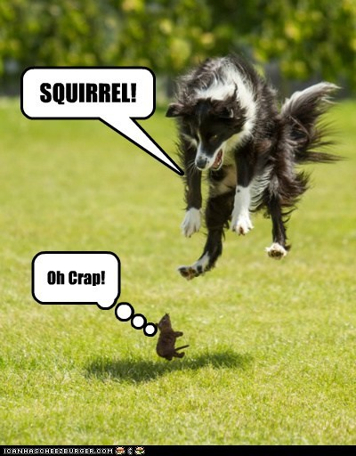 SQUIRREL! Oh Crap!