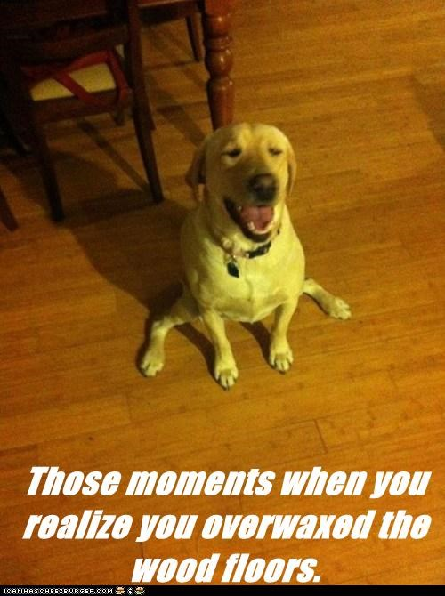dogs floor labrador smile Splits wax - 6461638144