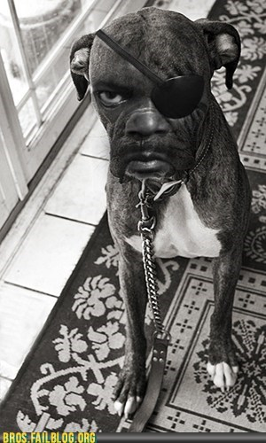 animals,dogs,manimals,photoshop,Samuel L Jackson