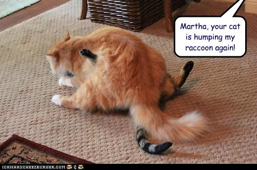 Martha, your cat is humping my raccoon again!