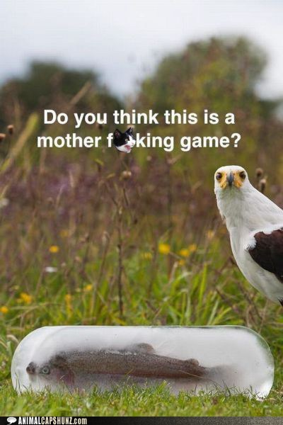 angry disappointed eagle fish frozen game - 6462294784