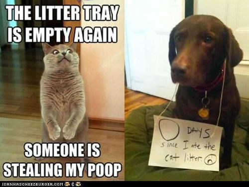 Cats dogs gross litter Memes multipanel mystery solved poop stealing - 6462426880