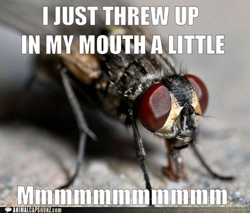 fly gross mmmmm mouth tasty threw up - 6462434560