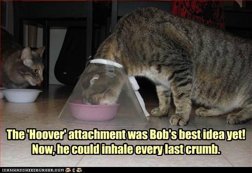 captions Cats cone food noms vacuum - 6462472704
