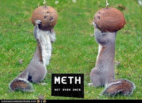 coconuts,drugs,meth,Not Even Once,squirrels