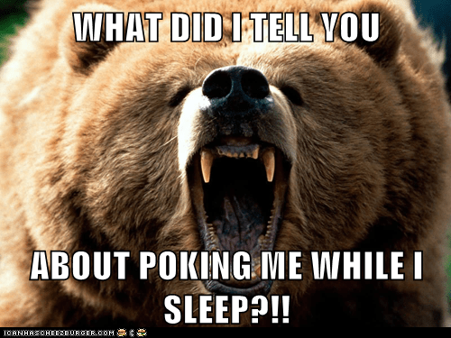 angry,bear,grizzly bear,poking,roar,saying,sleep,what-did-i-tell-you