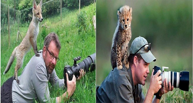 wildlife animals interested in cameras