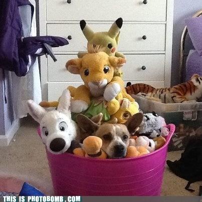 Animal Bomb dogs stuffed animals toys - 6462778880