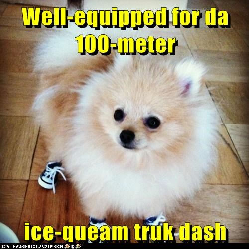 dogs,ice cream,pomeranian,race,shoes,sneakers,truck