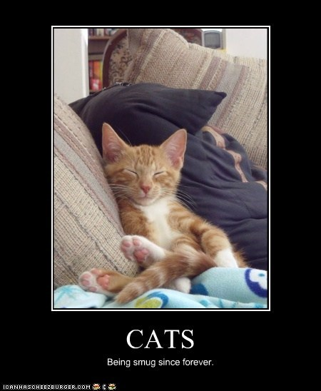 CATS Being smug since forever.