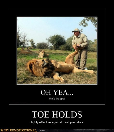 hilarious hold lion toe wrestling - 6463342592