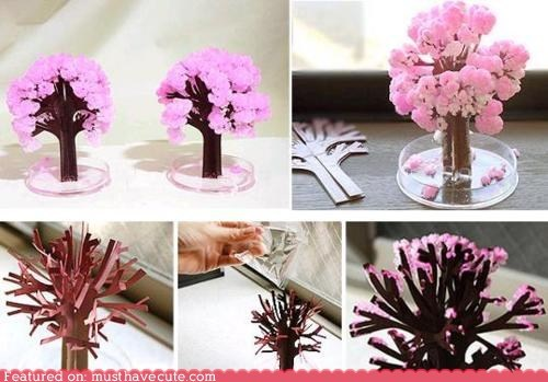 cherry blossoms,crystals,paper,science,tree