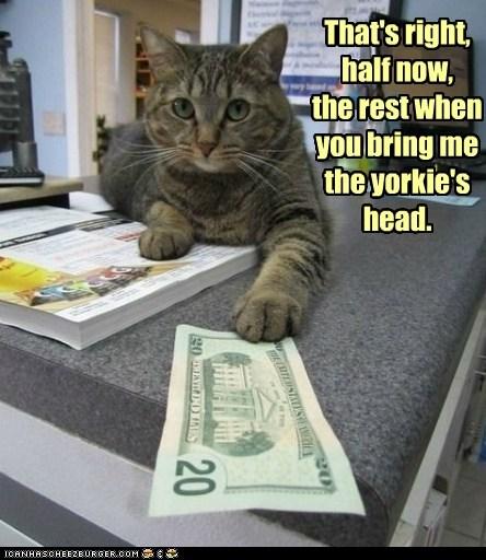 assasination captions cash Cats dogs hit hit man money - 6463855104