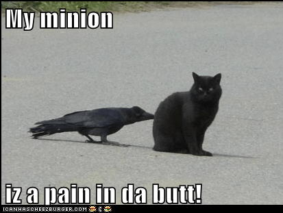 annoying,basement cat,crow,minion,pain in the butt,pecking