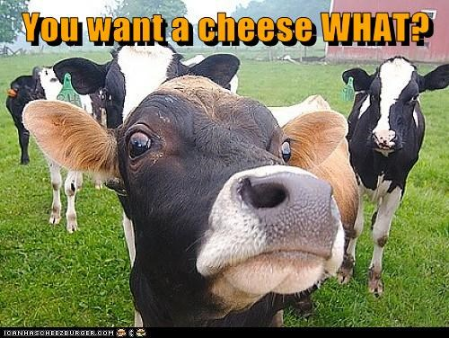 You want a cheese WHAT?