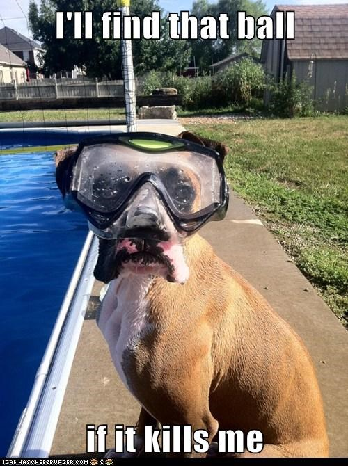 ball,bozer,captions,diving,dogs,goggles,snorkel,swimming pool