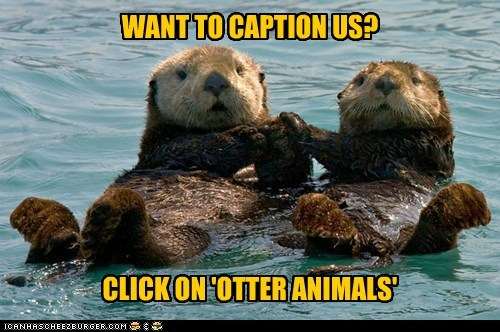 cation,instructions,Other Animals,otters,puns,tags