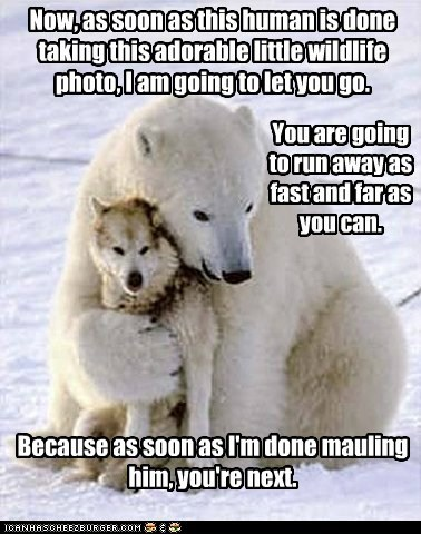 directions,friends,hug,mauling,photographer,polar bear,polite,warning,wolf