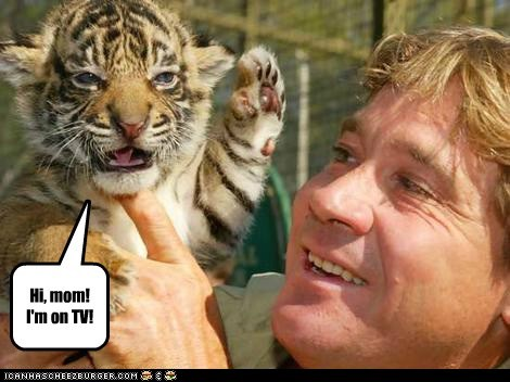 camera,hi mom,steve irwin,tiger,tiger cub,waving